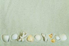 Koralen en zeeschelpen op zand Stock Foto