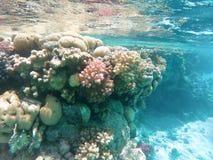 Koralen in het Rode Overzees stock afbeeldingen