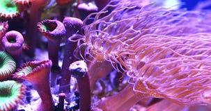 Koralen in onderwater tropische overzees stock video