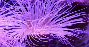 Koralen in onderwater tropische overzees stock videobeelden