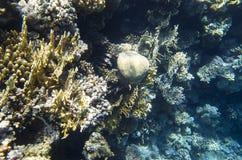 Koralen op de bodem royalty-vrije stock afbeeldingen