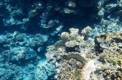 Koralen op de bodem stock foto's