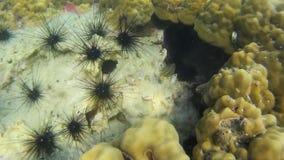 Koralen van Thailand stock video