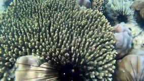 Koralen van Thailand stock footage