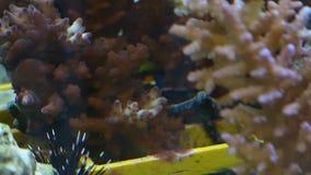 Koralen voor onderzoek stock footage