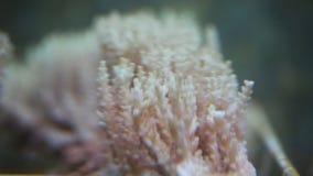 Koralen voor onderzoek stock video