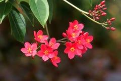 Korali kwiaty zdjęcia royalty free