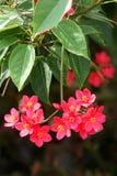Korali kwiaty zdjęcie royalty free
