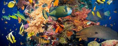 korali morza czerwonego strzał ryb zdjęcie royalty free