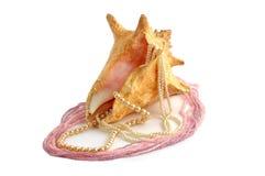 koralików cockleshell perły morze Zdjęcia Royalty Free