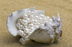 koralik skorupa Fotografia Stock