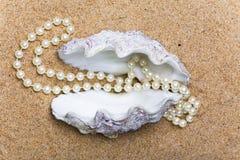 koralik skorupa Fotografia Royalty Free