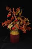 koraliki drzewni Zdjęcie Royalty Free