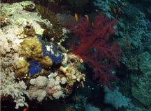 korall arkivfoton