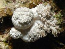 korall royaltyfria foton