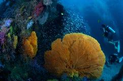 korall Fotografering för Bildbyråer