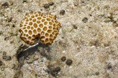 Korall i det grunda vattnet på den Zamami ön, Okinawa, Japan arkivfoto
