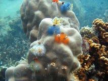 Korall i Koh Tao, Thailand Royaltyfria Bilder
