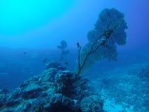 Korall i Thailand royaltyfria foton