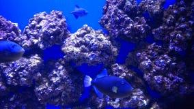 Korall II Arkivbilder