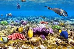 Korall och fisk i den röda Sea.Egypten royaltyfria bilder