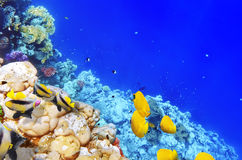 Korall och fisk i Röda havet. Egypten Afrika. Arkivfoto