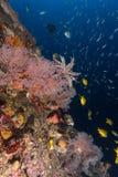 Korall- och fiskliv Fotografering för Bildbyråer