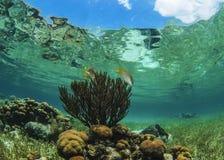 Korall och himmel - Roatan, Honduras Royaltyfri Foto