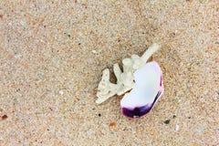 Korall och sand Arkivfoto