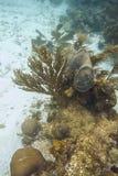 Korall och svamp i en rev Royaltyfri Bild