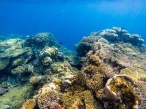 Korall och svampar i havet arkivbild