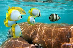 Korall och tropisk fisk Royaltyfri Fotografi