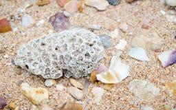 Korall på stranden royaltyfri foto