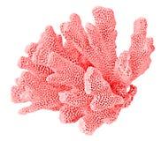 Korall på vit bakgrund royaltyfria foton