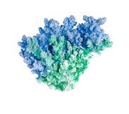 Korall på vit bakgrund Royaltyfri Bild