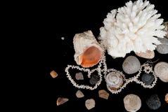 korall shells stenar Arkivfoto