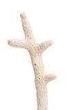 korall skjuten studio Royaltyfri Fotografi