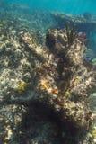 Korall vaggar bildande Fotografering för Bildbyråer
