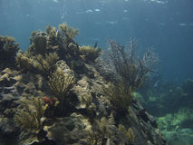 korallberg royaltyfria foton