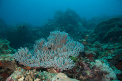 korallbildande Arkivfoton