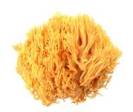 KorallchampinjonRamaria flava Changle Arkivbilder