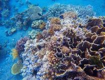 Korallcloseup i tropisk kust Undersea landskapfoto Faunor och flora av den tropiska kusten Royaltyfri Fotografi