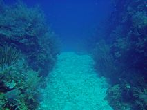 koralldal Fotografering för Bildbyråer