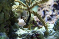 koralldetaljfisk royaltyfri foto
