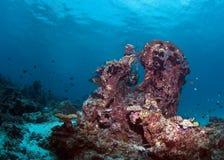 koralldykarerev Royaltyfria Foton