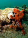 Koralle Lizenzfreie Stockbilder