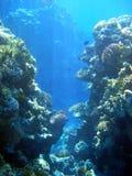 Koralle 2 Lizenzfreies Stockbild