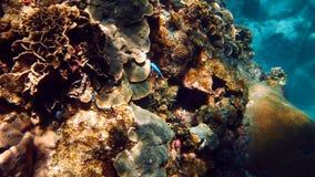 Koralle stockbild