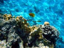 Koralle 3 Stockbild