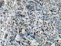 Koralle stockfotos
